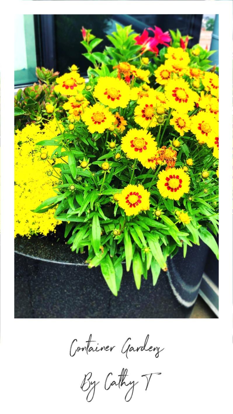 Hot Yellows